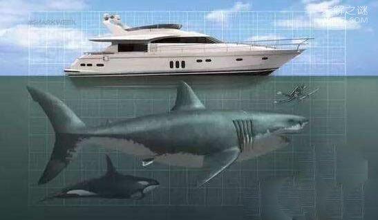 40吨重的巨齿鲨生死谜,找不到足够的食物灭绝(活活饿死)
