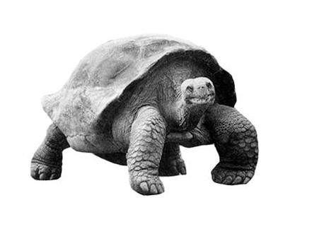 地球五大不死神兽,它活了507岁却不小心给科研人员弄死