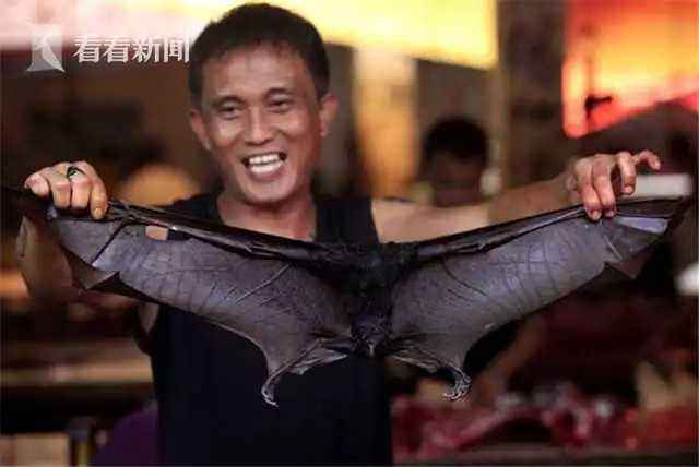 不要命!印尼蝙蝠仍在热卖 节假日每天卖600只