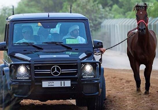 全球最性感王室成员:迪拜王储哈曼丹(养狮子当宠物)