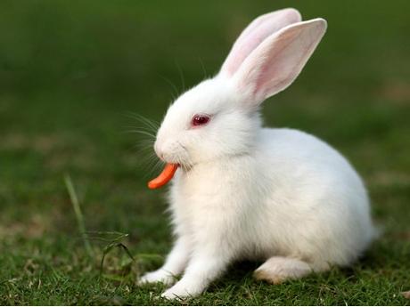 梦见喂兔吃草