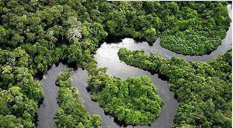 """亚马逊森林中传说中的""""黄金国""""是否存在过?"""