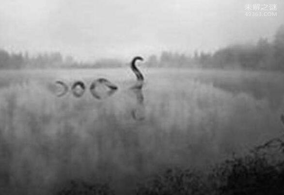 加拿大奥古布古水怪目击图,摄像机记录奥古布古的身影