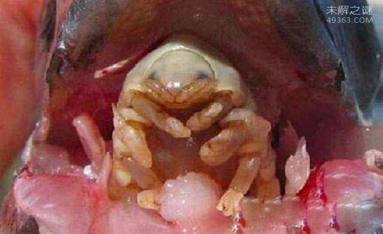 外星寄生虫控制美女身体,吸血液为食