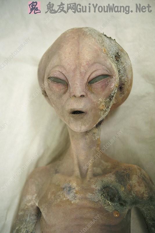 国外科研网站上一组解剖外星人照片