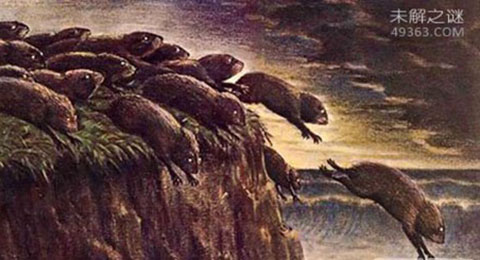 旅鼠自杀之谜:旅鼠的繁殖能力超强(半年就能繁殖100万只)