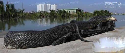 红海巨蛇是一条彻彻底底的骗局,P图特效就值五毛