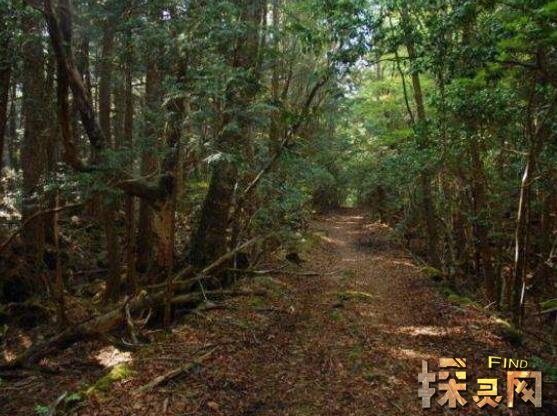 日本自杀森林恐怖吗,遍地尸骨残骸/诡异之声阵阵入耳