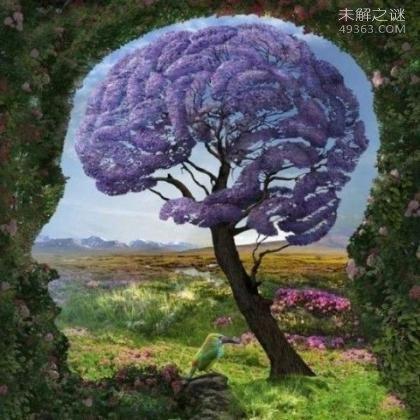 世界上IQ最高的人是谁?人类大脑10大惊天秘密