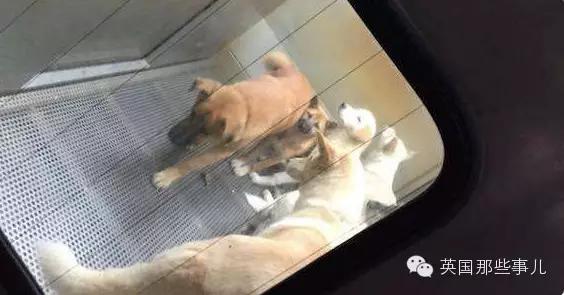流浪狗安乐死的全过程!