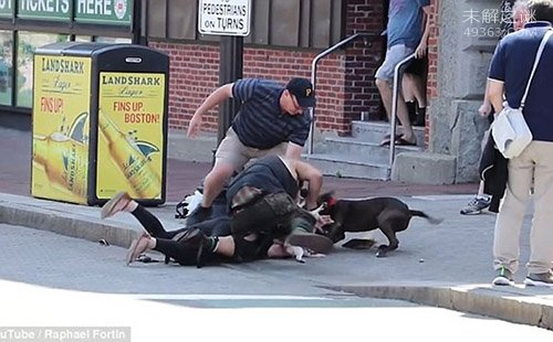 斗牛犬疑护主心切突然发狂攻击比高犬,女主人飞身扑救双双受伤