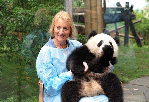 熊猫夫人:一个美国女人偷走中国一只大熊猫的事迹