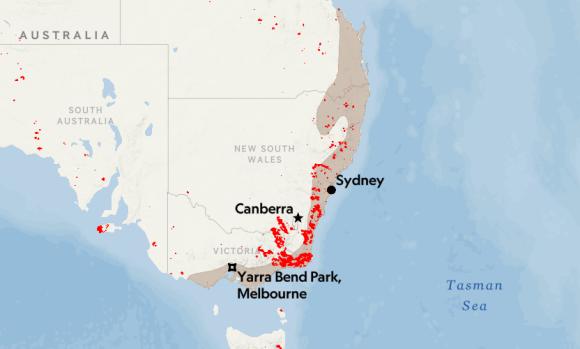 澳大利亚极端高温来袭,狐蝠大量死亡