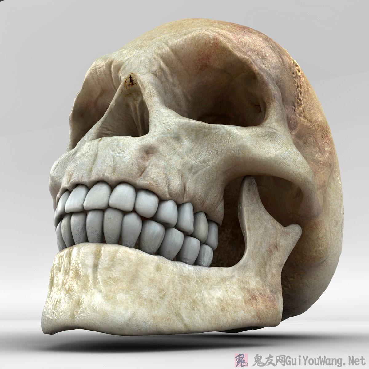 一组高清晰骷髅头骨壁纸素材
