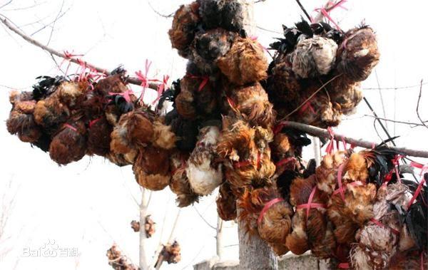 中国十大禁菜 这些菜肴是怎么诞生的
